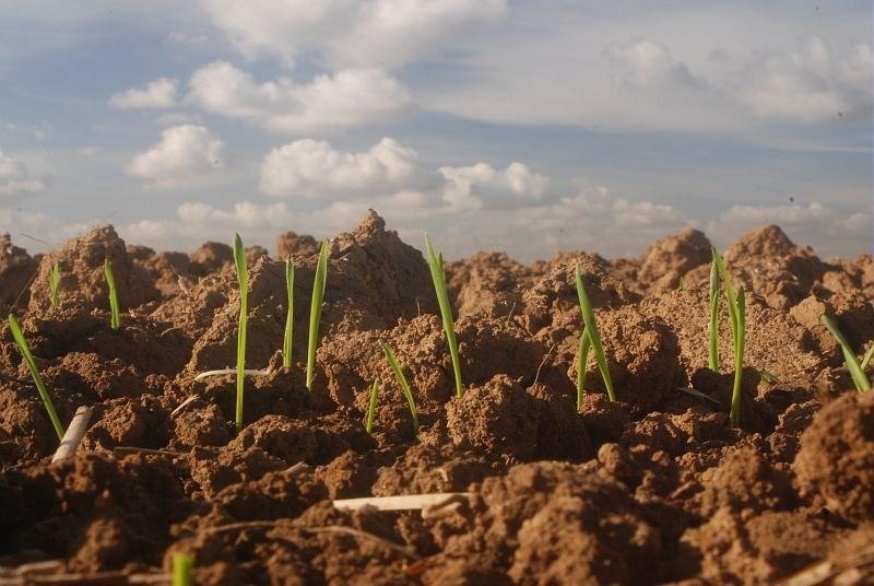 BP responsable d'exploitation agricole