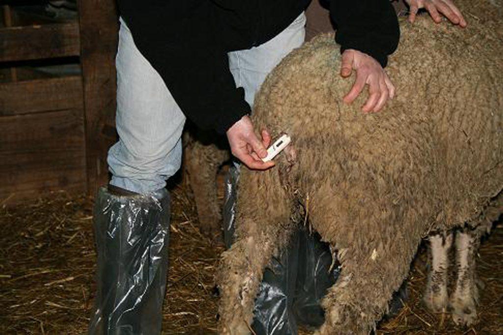 CFPPA Montbrison - Infirmier élevage
