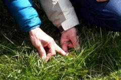 Prairies à flore variée (PFV)