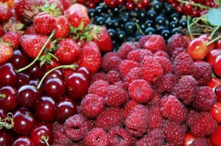 CFPPA Montbrison - Petits Fruits