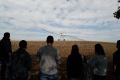 Actu Irrigation en TCAF